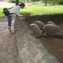 Chamarel - u želviček