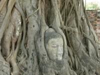 Mistni atrakce .. budha ve stromu