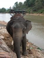 Slon ... :)