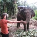 krmeni-slona