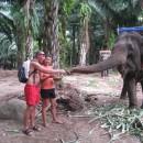 krmeni-slona_2