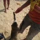 krmim-opice